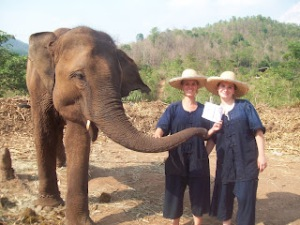 18. Learn how to be an elephant mahout (trainer) in Thailand.